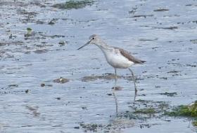 aves de estuario y costa