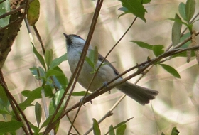 Aves de prado y bosque
