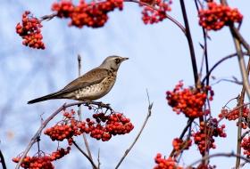 Aves del bosque