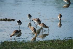 Aves en paso