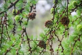 Bosque de Caviedes