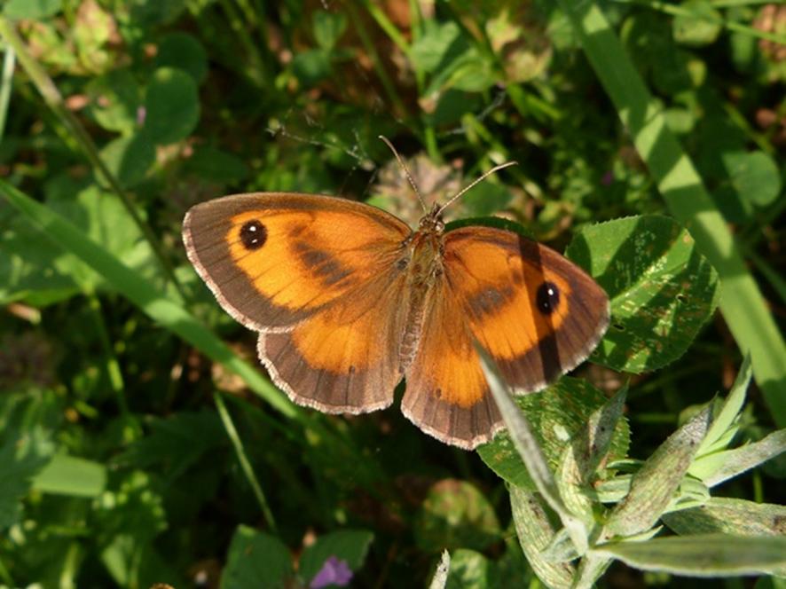 Censo de Mariposas