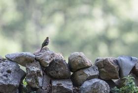Identificación de aves por Antonio Pérez