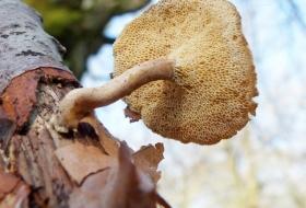 Identificación de setas y hongos