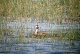 Maratón Ornitológico Embalse del Ebro