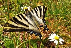 Observación de mariposas