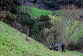 Monte Arabedes