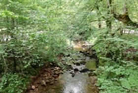 #Natureandoencorto Robledal de Castrejón