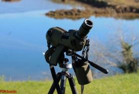 Oyambre Observación de aves