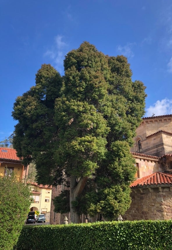 Ruta botánica jardín del Pas