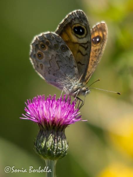Taller muestreo de mariposas Saja Besaya