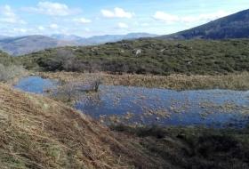 Turberas del río Magdalena