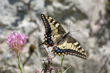 Las Mariposas del Parque Natural de las Marismas de Santoña, Victoria y Joyel