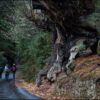 Los Grupos de Acción Local acuerdan a balizar 36 rutas de senderismo en la Red de Espacios Naturales Protegidos bajo la marca 'Naturea Cantabria'