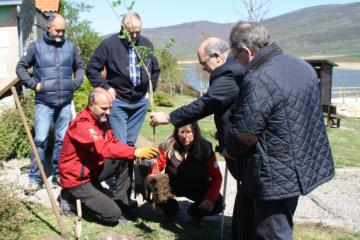 Los primeros olmos en Cantabria resistentes a la grafiosis