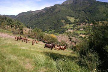 Monte Carielda