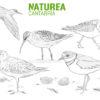 #Natureaencasa Hoy os mostramos las aves limícolas