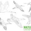 #Natureaencasa Conoce las aves migradoras del Parque Natural de las Marismas de Santoña, Victoria y Joyel