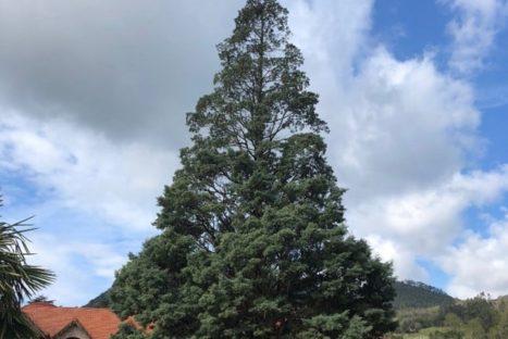 #Natureandoencorto: Ruta botánica jardín del Pas