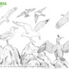 #Natureaencasa Os mostramos las aves del acantilado