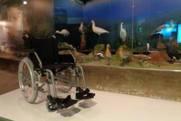 Accesibilidad: sillas de ruedas disponibles en Santoña y Oyambre