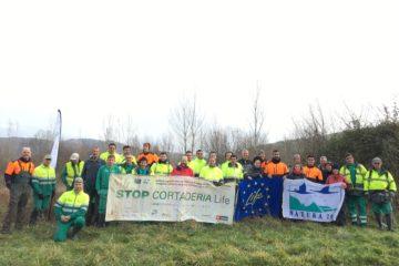 Unidos contra el plumero: Los proyectos LIFE Stop Cortaderia y Naturea Cantabria realizan una eliminación conjunta de plumero en Prases, Corvera de Toranzo