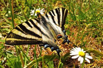 Mariposas y nenúfares