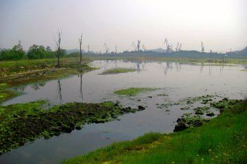 El proyecto de Decreto de declaración de las Marismas de Astillero como Área Natural de Especial Interés está en periodo de información pública