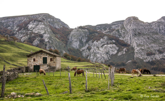 Prados de pasto con ganado equino en el cabañal de Rulao.