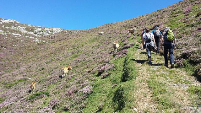 Ruta guiada e interpretada en el Alto Asón, en concreto se trata de la subida al Porrón de Busturejo.