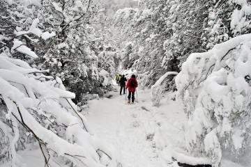 Taller: Huellas en la nieve en el PN Saja Besaya