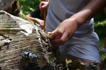 El Escarabajo Azul