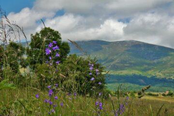 Monte Sobardal