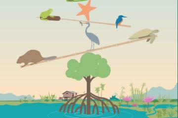 Celebramos el Día Mundial de los Humedales y ofrecemos varias actividades gratuitas para conocerlos en detalle