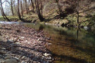 #Natureandoencorto: ruta fluvial del Saja