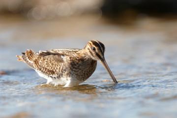 #FindesemanaAves Maratón ornitológica (nivel iniciación)