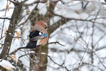 Censo de aves en campiña
