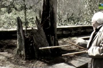 Documental: El Tejo de Lebeña