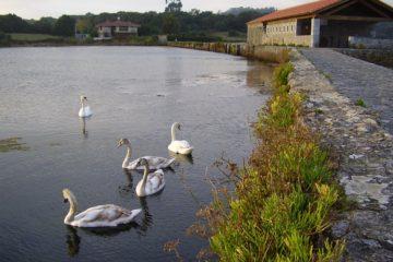 #Natureandoencorto: Marisma de Joyel