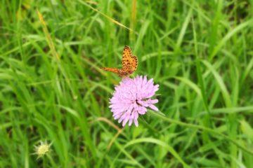Plantación de un jardín de mariposas en Udías