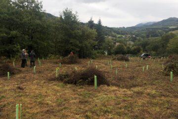 Conservación y mejora de la plantación forestal en Valle de Villaverde. Monte El Polvo