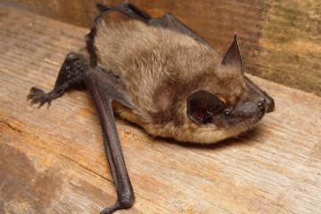 Nocturna: Murciélagos de Campoo