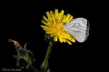 Taller familiar: muestreo de mariposas