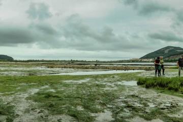 Intermareal fangoso en La Arenilla