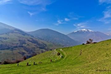 Monte Cestera