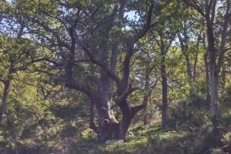 Bárcena mayor y su entorno natural