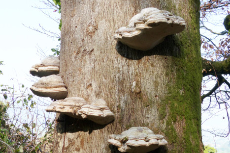 Identificación de hongos y setas