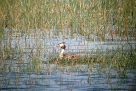 Rallye Ornitológico del Embalse del Ebro