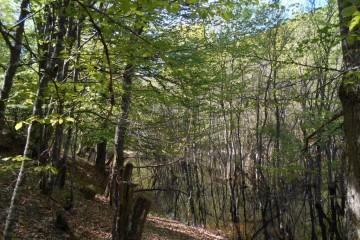 Robledal de Llano (ruta fam.)