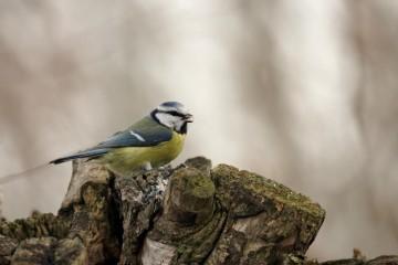 Aves del páramo